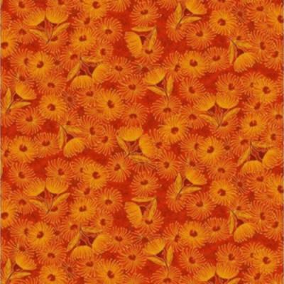 Flowering gum 12 3 orange
