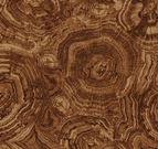 Stonehenge Woodland 39050-37