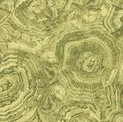 Stonehenge Woodland 39050-68