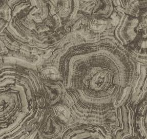 Stonehenge Woodland 39050-92