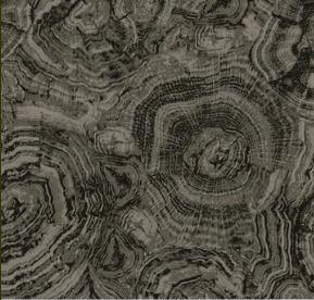 Stonehenge Woodland 39050-94